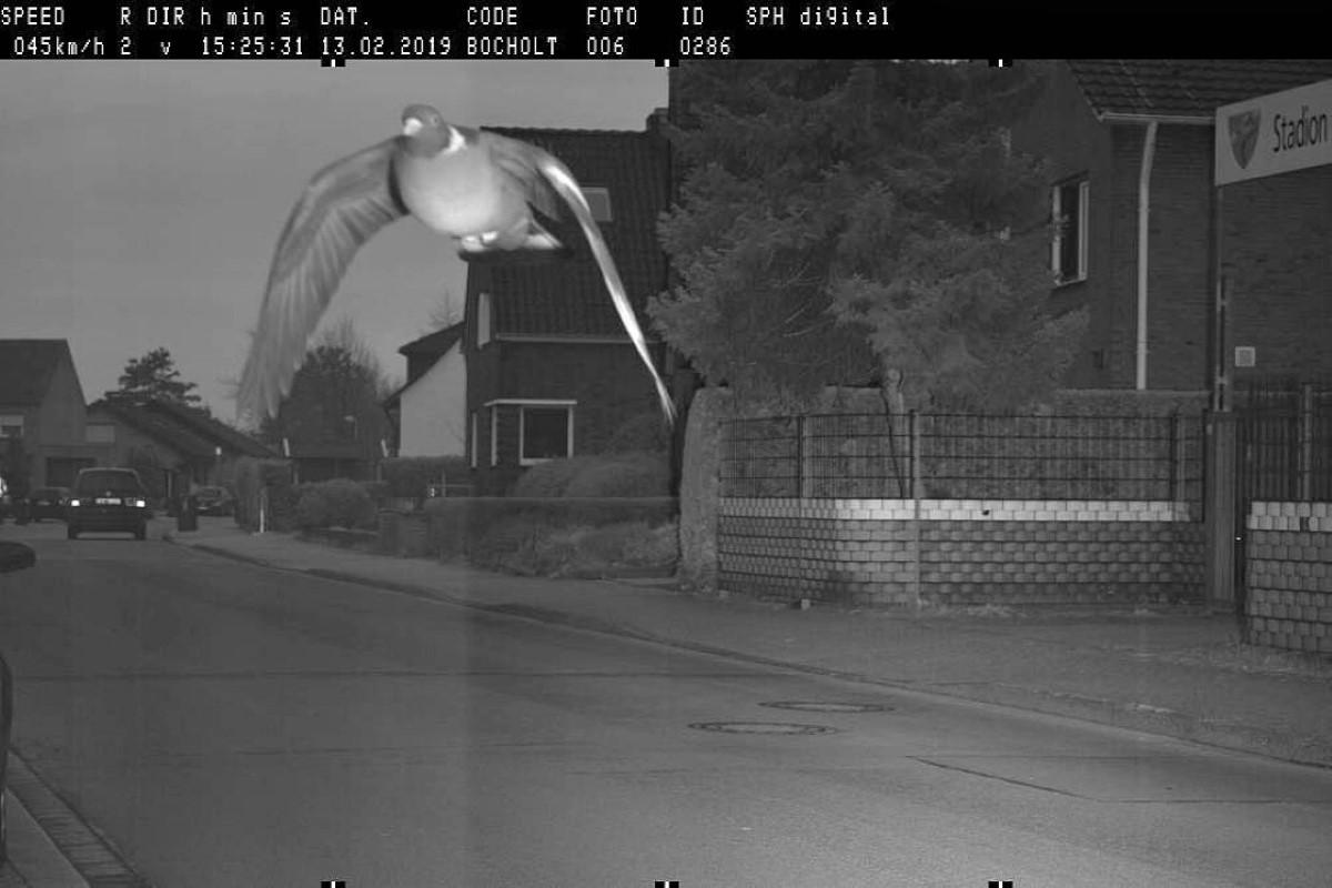 Дорожная камера в Германии зафиксировала превышение скорости голубем-лихачем